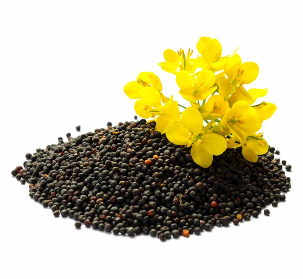 canola_products